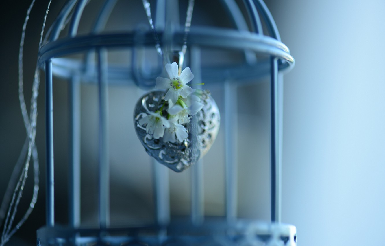 Фото обои цветы, клетка, кулон, сердечко