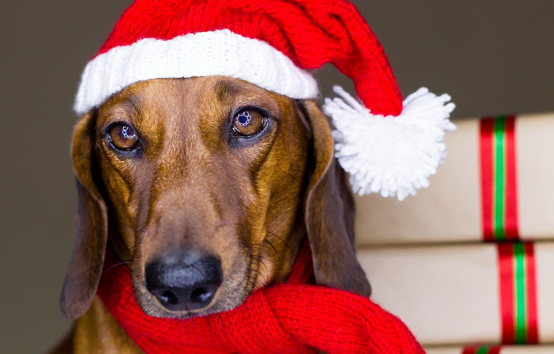 Собаки с новым годом картинки
