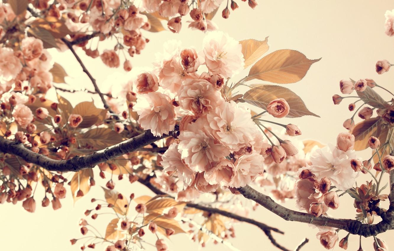 Фото обои лето, листья, цветы, ветки, природа, лепестки, цветение, vintage, nature, винтаж
