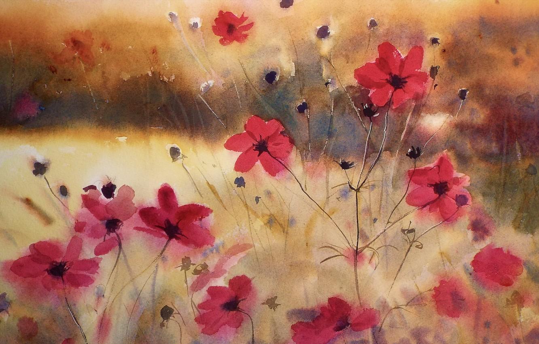 Фото обои flowers, cosmos, watercolor