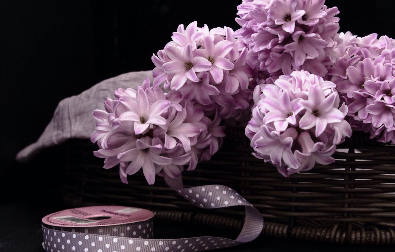 картинки на рабочий стол цветы в коробке аквариумистике