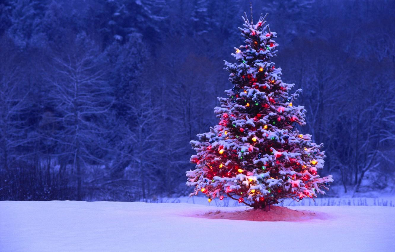 Фото обои снег, огни, елка, подсветка