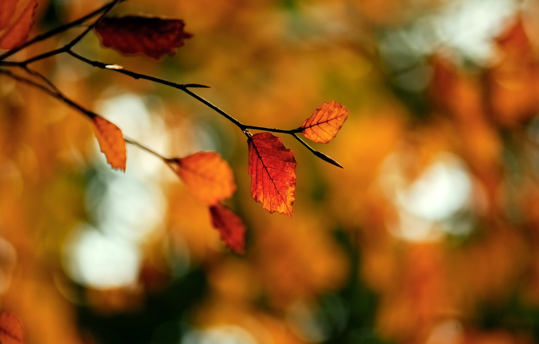 Фото обои осень, макро, блики, листва, ветка