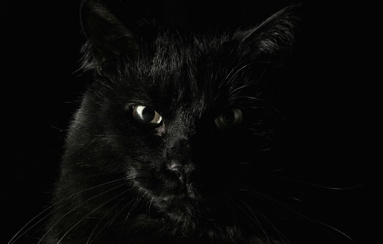 Обои Чёрная. Животные foto 12