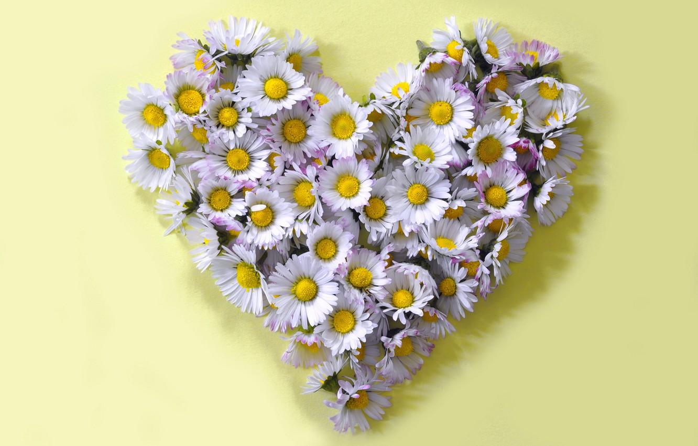 Фото обои цветы, стиль, форма