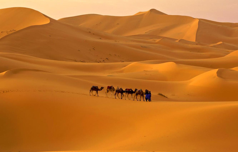 Фото обои песок, небо, пустыня, бархан, верблюд, караван