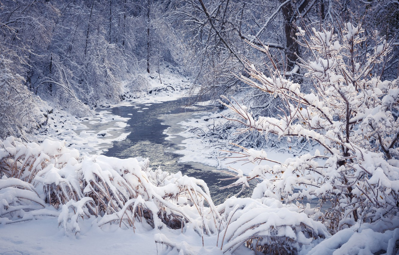 Фото обои зима, лес, снег, деревья, снежинки, nature, winter, snow
