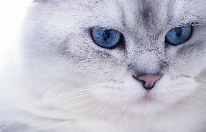 работе картинка на рабочий стол котики белые найдётся кто-то, кто