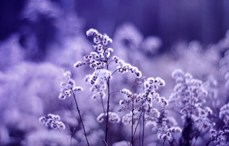 Фото обои макро, цветы, блики, растение, цвет, растения, размытость, фиолетовые, сиреневые, сухоцвет
