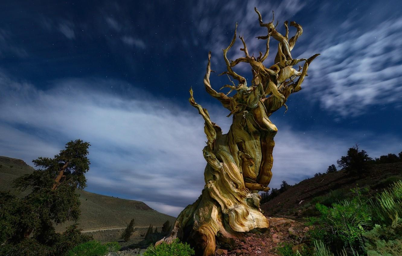 похвалила странное дерево фото данный момент