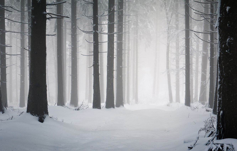 Фото обои холод, зима, дорога, снег, деревья, дерево, стволы, дороги, мороз, снегопад, леса, winter wallpapers, просека, зимняя …