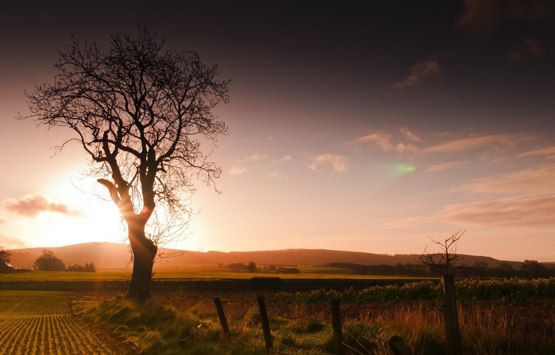 Фото обои поле, пейзаж, закат, дерево, забор