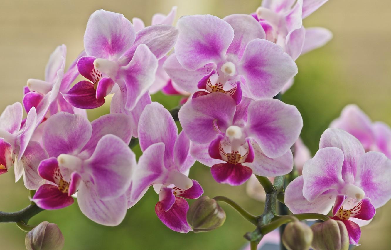 Картинка на рабочий стол цветы орхидеи
