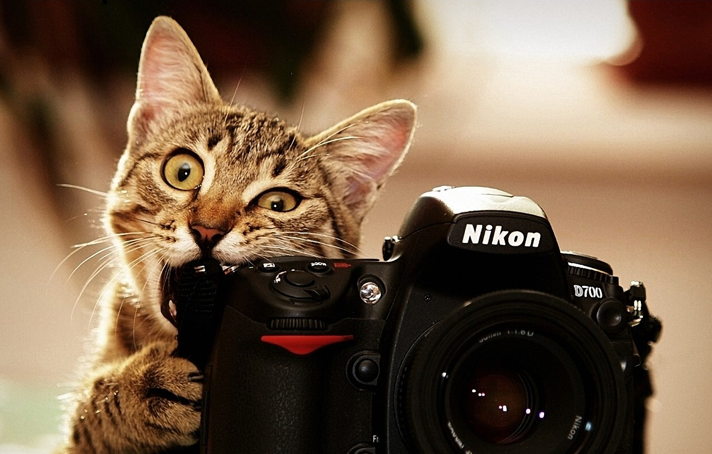 Фото обои кот, фото, nikon, котэ