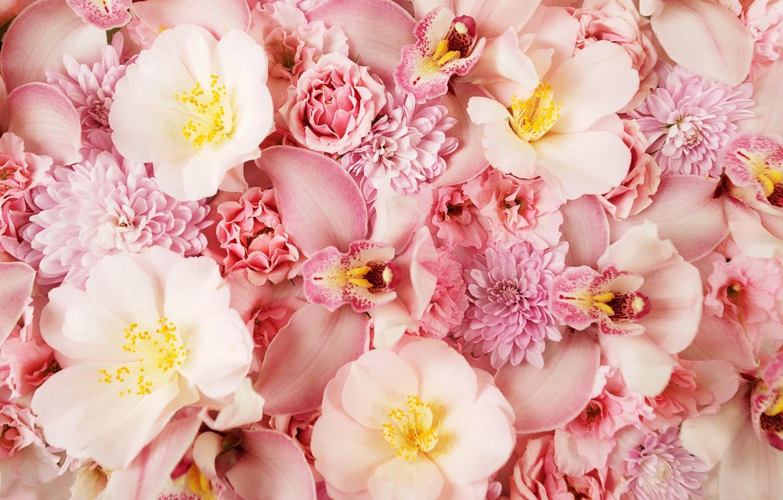 Фото обои цветы, розовый фон, орхидея