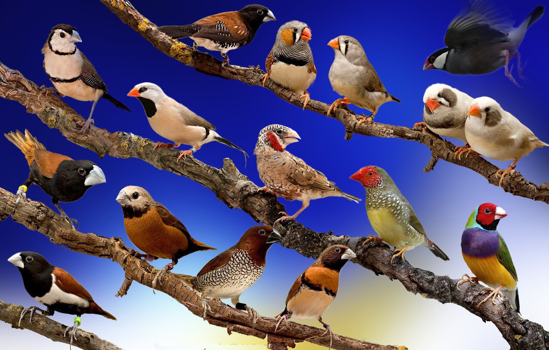 Смотреть картинки про птиц
