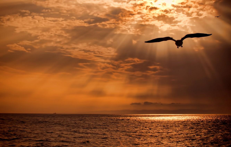 Картинки летающих птиц над морем