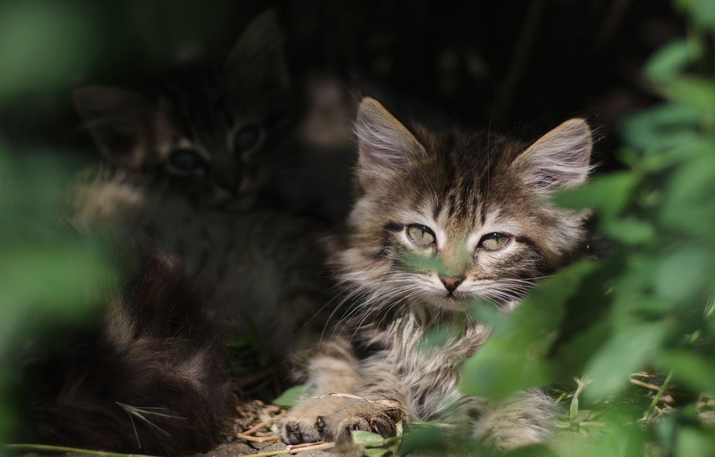 Фото обои зелень, глаза, мордочка, котята, убежище