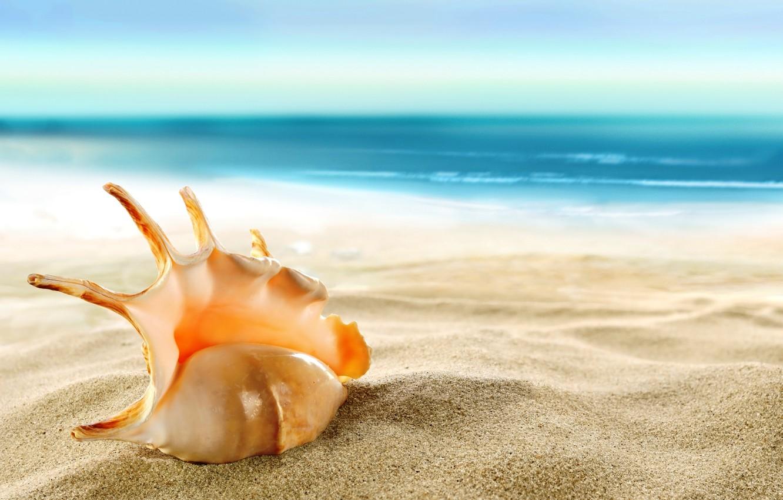 Фото обои песок, море, пляж, ракушка, beach, sea, sand, shore, seashell