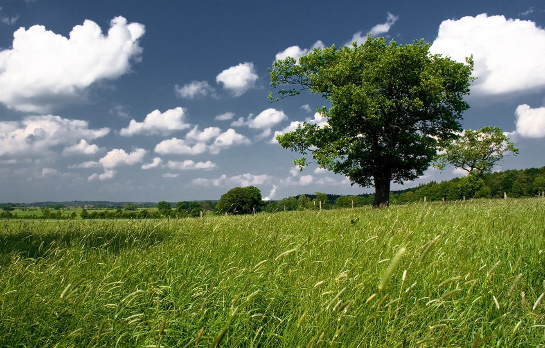 Фото обои зелень, поле, небо, дерево