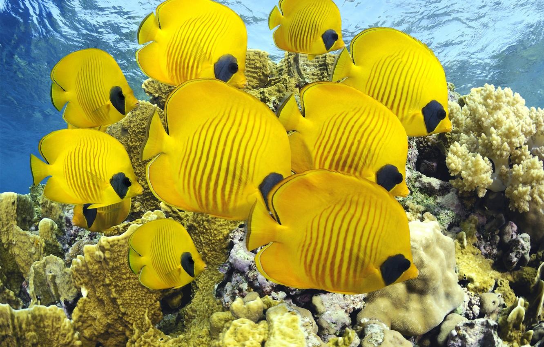 Фото обои sea, ocean, nature, water, animal, fish, reef, America, sugoi, subarashii, coral, tourism, Costa Rica, tropical …