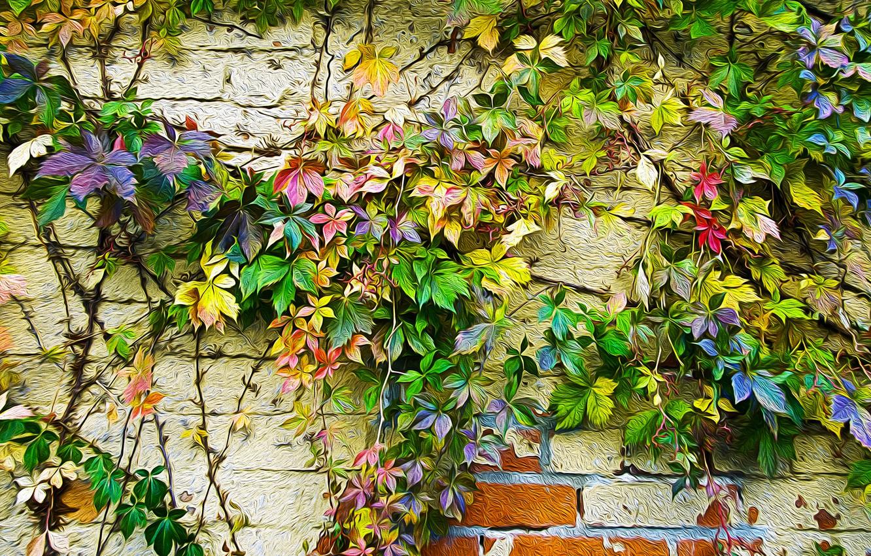 Фото обои осень, листья, стена, краски, рисунок, цвет, плющ