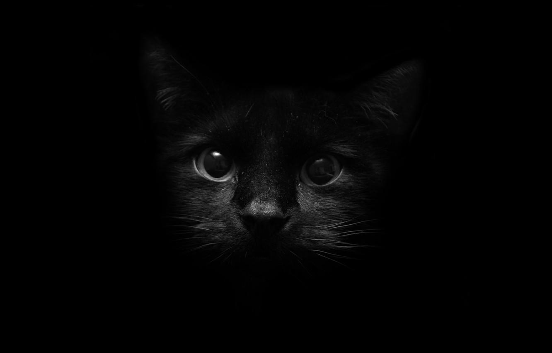 Фото обои глаза, кот, взгляд, темнота, стиль