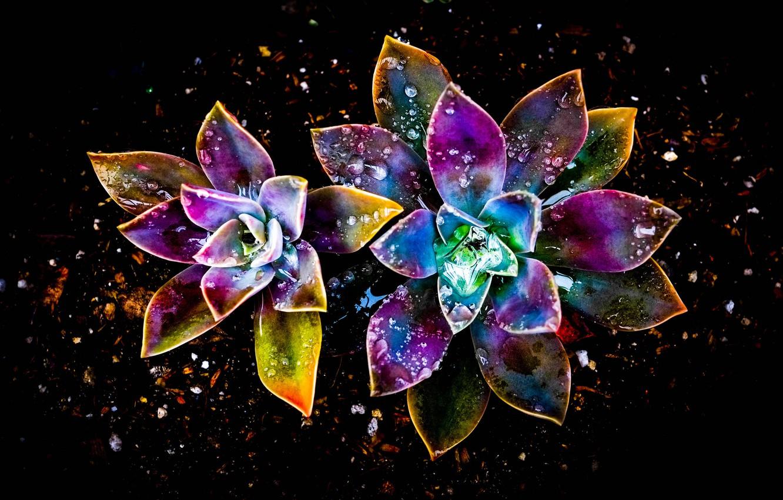 Обои цветок, абстракция. Абстракции foto 8
