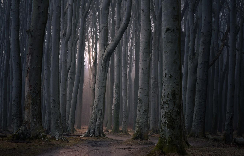 Фото обои дорога, лес, деревья