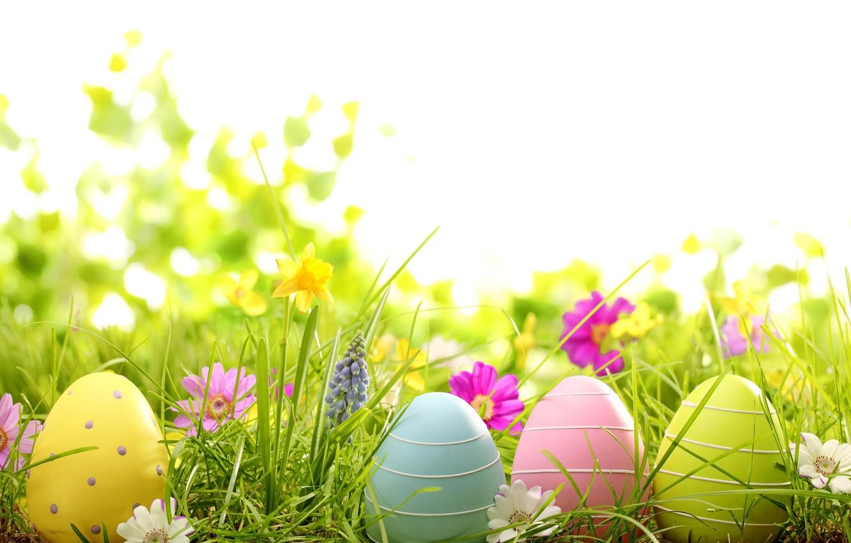 Фото обои трава, цветы, яйца, весна, пасха, grass, flowers, spring, крашеные, eggs, easter, daisy, camomile