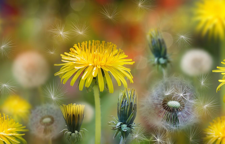 Обои вектор, лейка, Коллаж, цветы. Разное foto 13