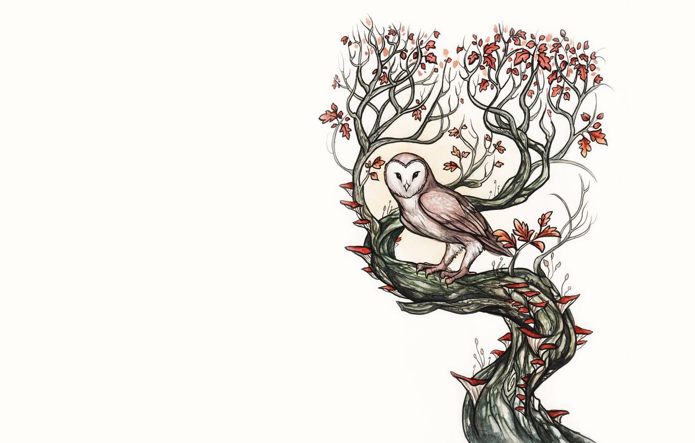 совершить рисунок сова на ветке дерева отвара травы расширяет