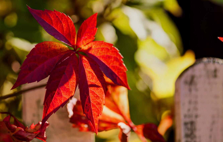 Фото обои осень, природа, лист, забор