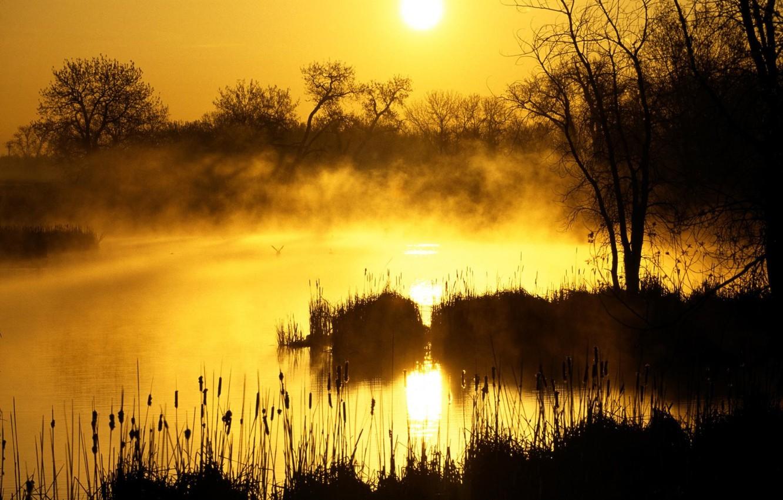 Фото обои солнце, восход, болото