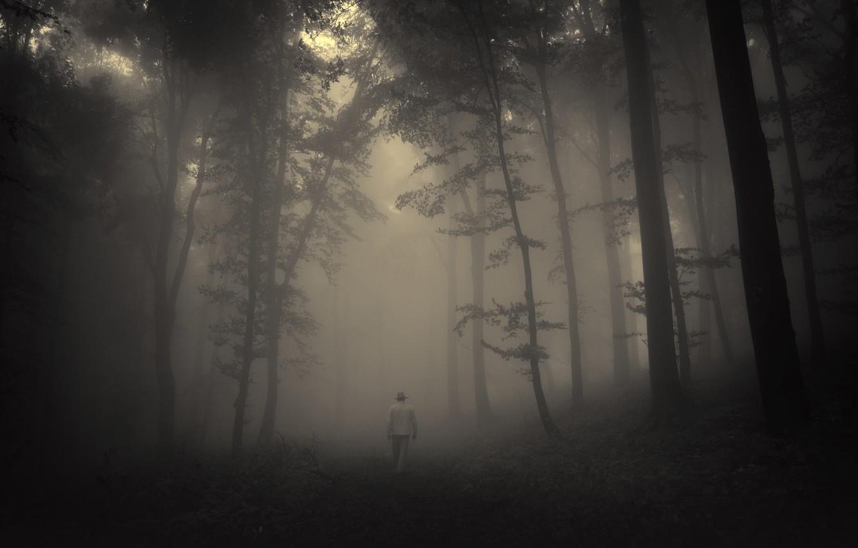 Обои misty, forest, Road. Природа foto 12