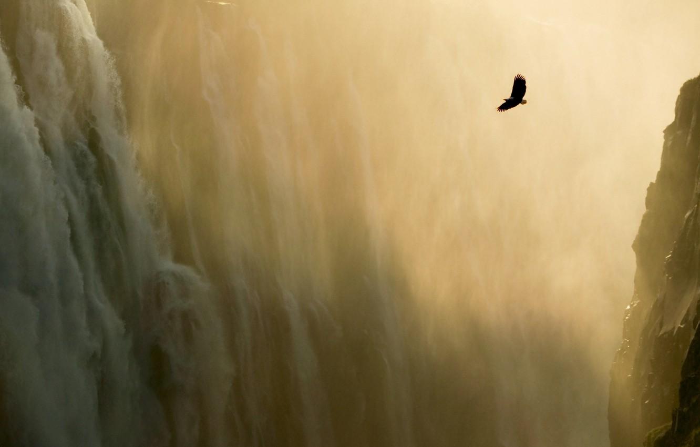 Фото обои горы, орел, водопад