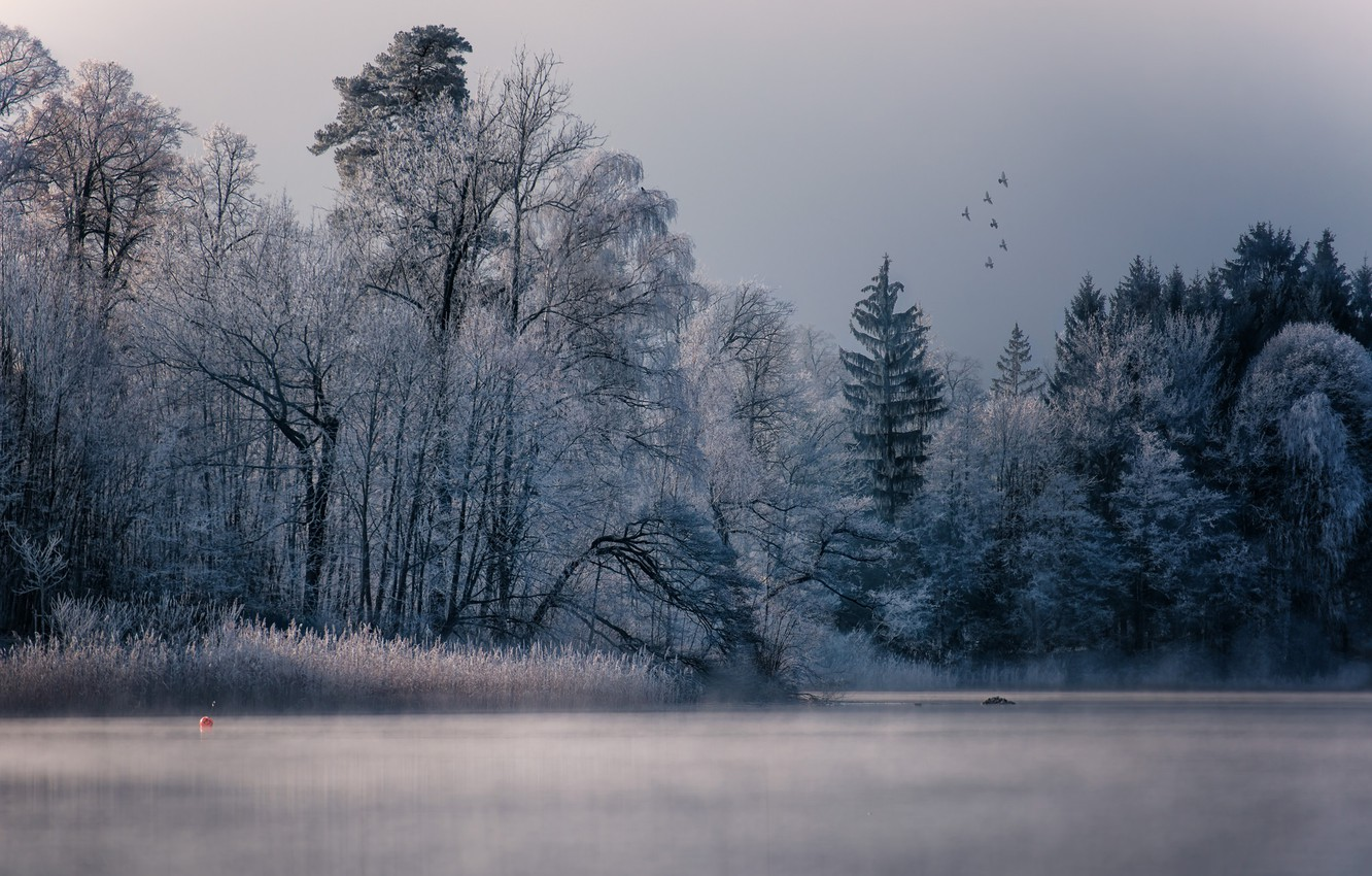 Фото обои winter, lake, birds, fog