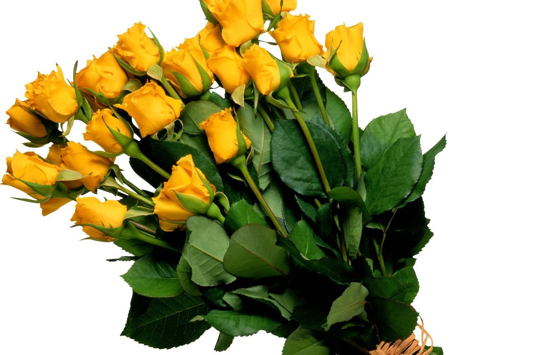 Фото обои цветок, цветы, розы, букет, желтые, жёлтые