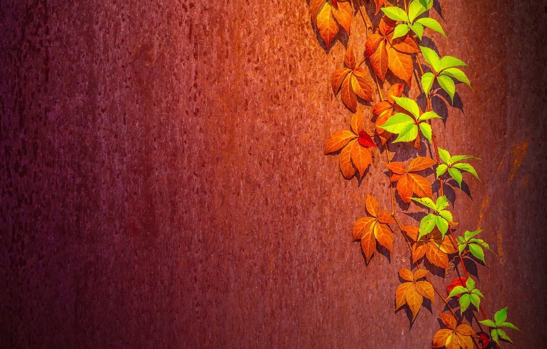 Фото обои листья, фон, стена