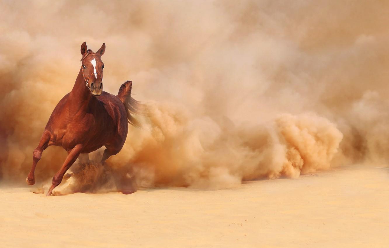 Лошадь несется картинки