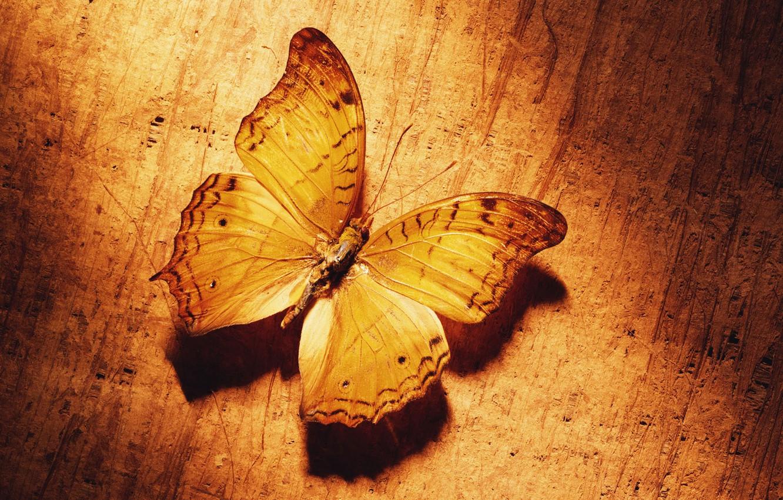 Фото обои желтый, Бабочка