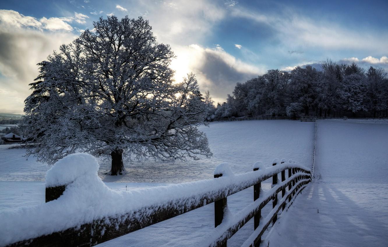 Фото обои зима, небо, облака, снег, деревья, природа, дерево, забор