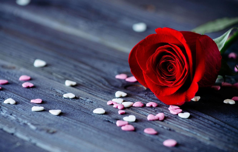 Обои цветок, красная. Цветы foto 7