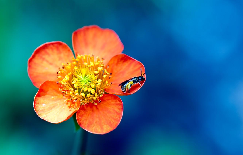 Фото обои цветок, макро, краски, оса, colors, лепестки, насекомое, flower, macro, боке, bokeh, wasp, 2560x1600, petals, insect