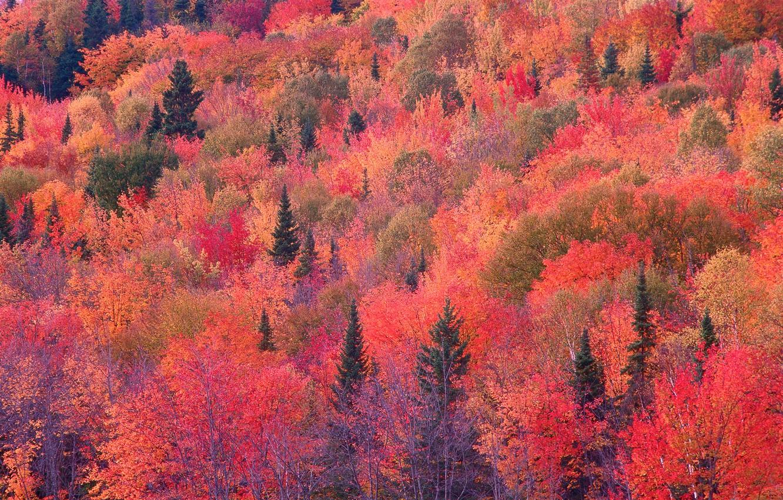 Фото обои осень, лес, склон, багрянец
