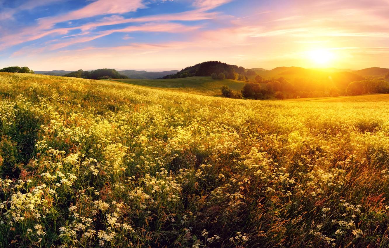 каждой красивой солнце и поле фото житейских
