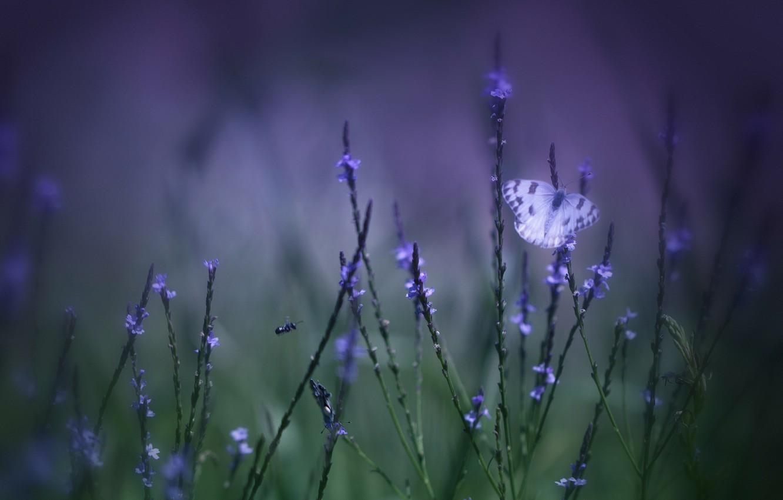 Фото обои поле, фиолетовый, трава, макро, цветы, зеленый, фон, Бабочка, размытость, сиреневые