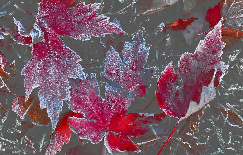 осень зима картинки на телефон
