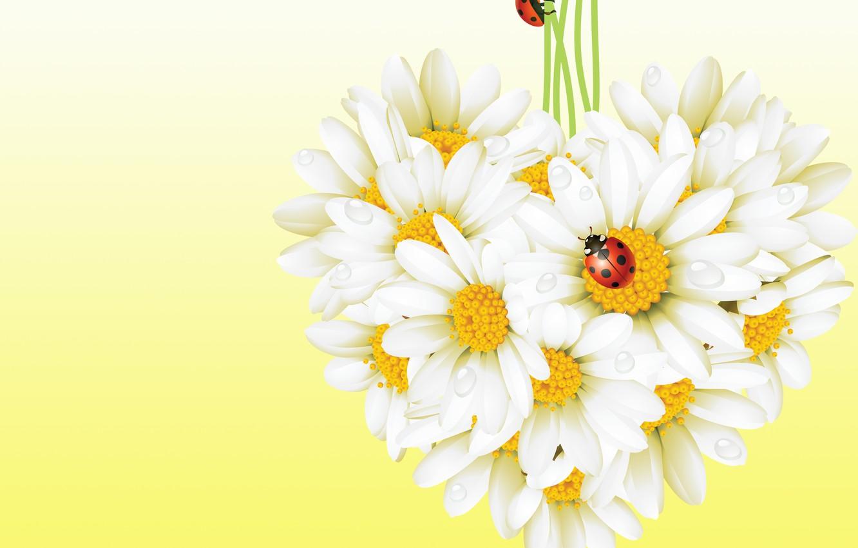 Фото обои цветы, насекомые, божья коровка, ромашка