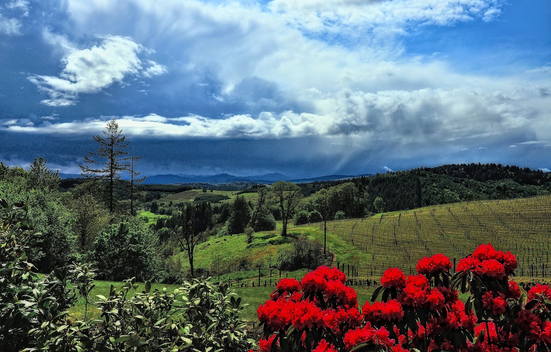 Фото обои небо, деревья, цветы, горы, холмы